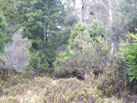 Picture of Lot 2 Cradle Mountain Road, Moina