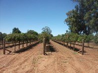 Picture of 213 Old Sturt Highway, Barmera