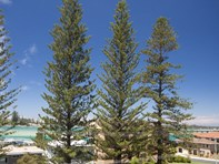 Picture of Wharf Street, Tuncurry