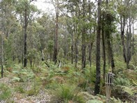 Picture of Lot 43 Karri Lane, Quinninup