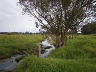 Picture of Lot 111 Nuttall Road, The Plains