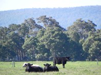 Picture of Lot 406 Mayfield Road, Waroona