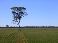 Picture of Lot 167/ MAHERS RD, Koorda