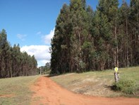 Picture of 100 Hodgsons Road, Manjimup