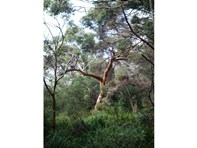 Picture of Lot 29-30 Caves Road, Deepdene