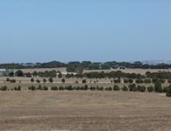 Picture of Lot 10 Cnr Playford Highway and Karatta Terrace, Kingscote