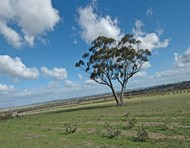 Picture of Brookton