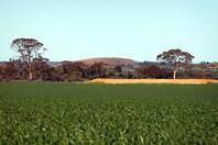 Picture of N/ A Webb Road, Warralakin