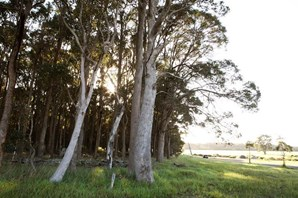 Main photo of 5 (Proposed Lot) Brookfield Avenue, Margaret River - More Details