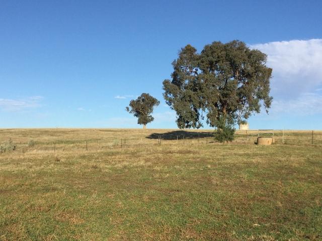 "Photo of 944 ""Mungarra"" Pulletop Road COOKARDINIA, NSW 2650"