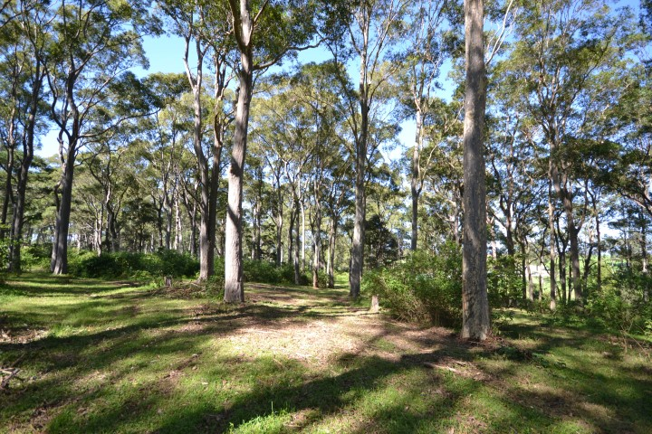 Photo of Lot 11 Devitts Lane MEROO MEADOW, NSW 2540