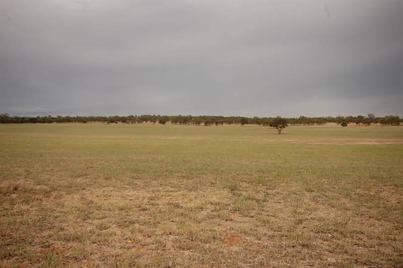 Photo of Back Hillston Road Tabbita, NSW 2652