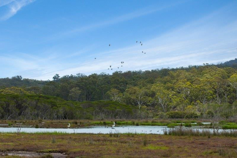 Picture of Lot 722 Princes Hwy, Millingandi