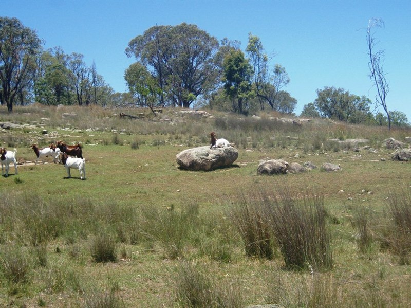 Photo of 695 New Valley Rd TINGHA, NSW 2369