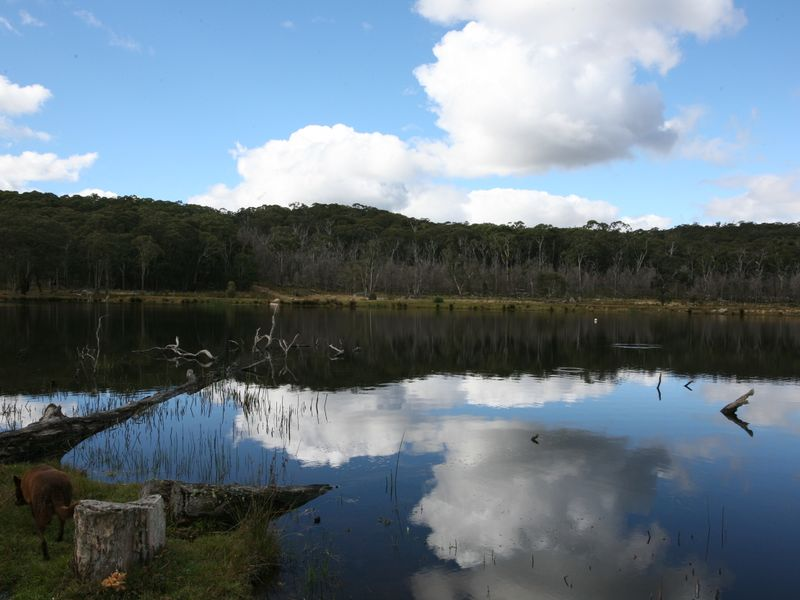 Photo of 189 Warra Forest Road MOUNT MITCHELL, NSW 2365