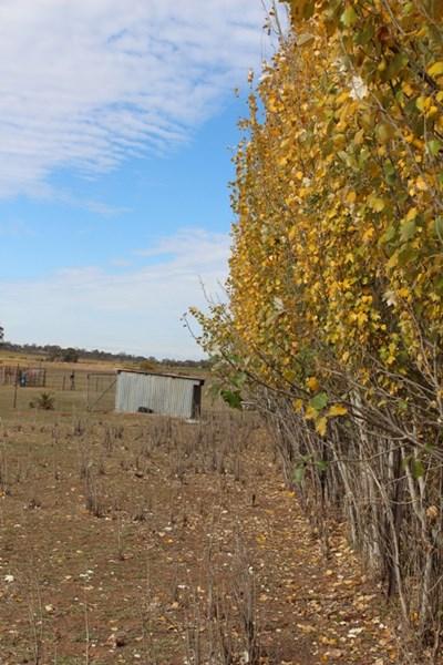 Photo of 190 Corbie Hill Rd Leeton, NSW 2705
