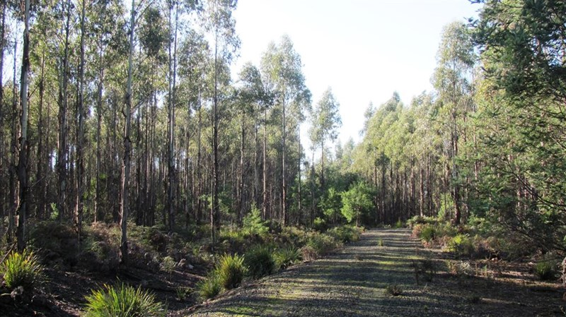 Photo of 47.6ha Hodgetts Road Rosevale, TAS 7292