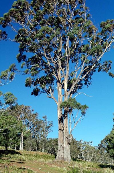 Photo of 590 & 595 Dragon Swamp Road Cathcart, NSW 2632