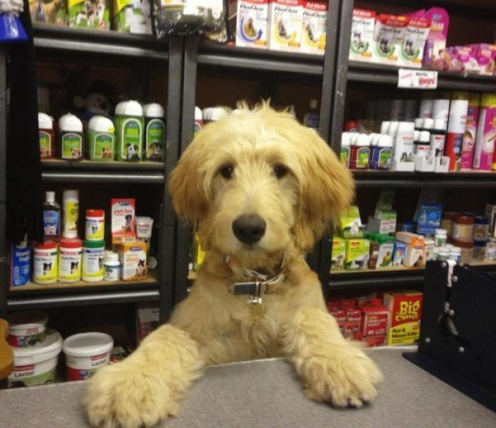 Animal Related  business for sale in Doncaster East - Image 1