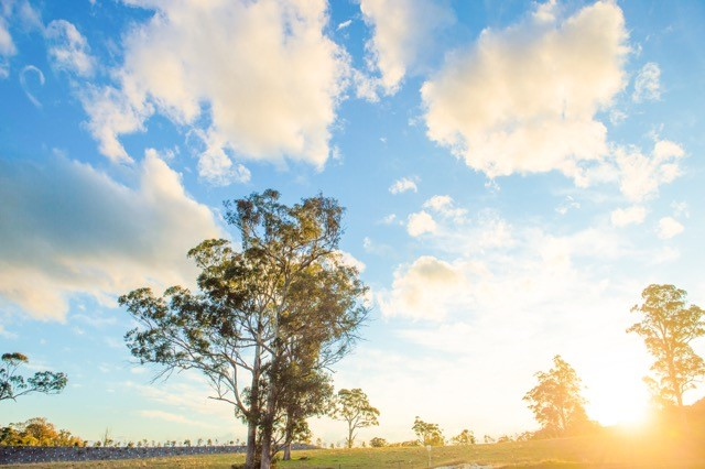 Lot 980  Thoroughbred Drive, Cobbitty NSW 2570, Image 0