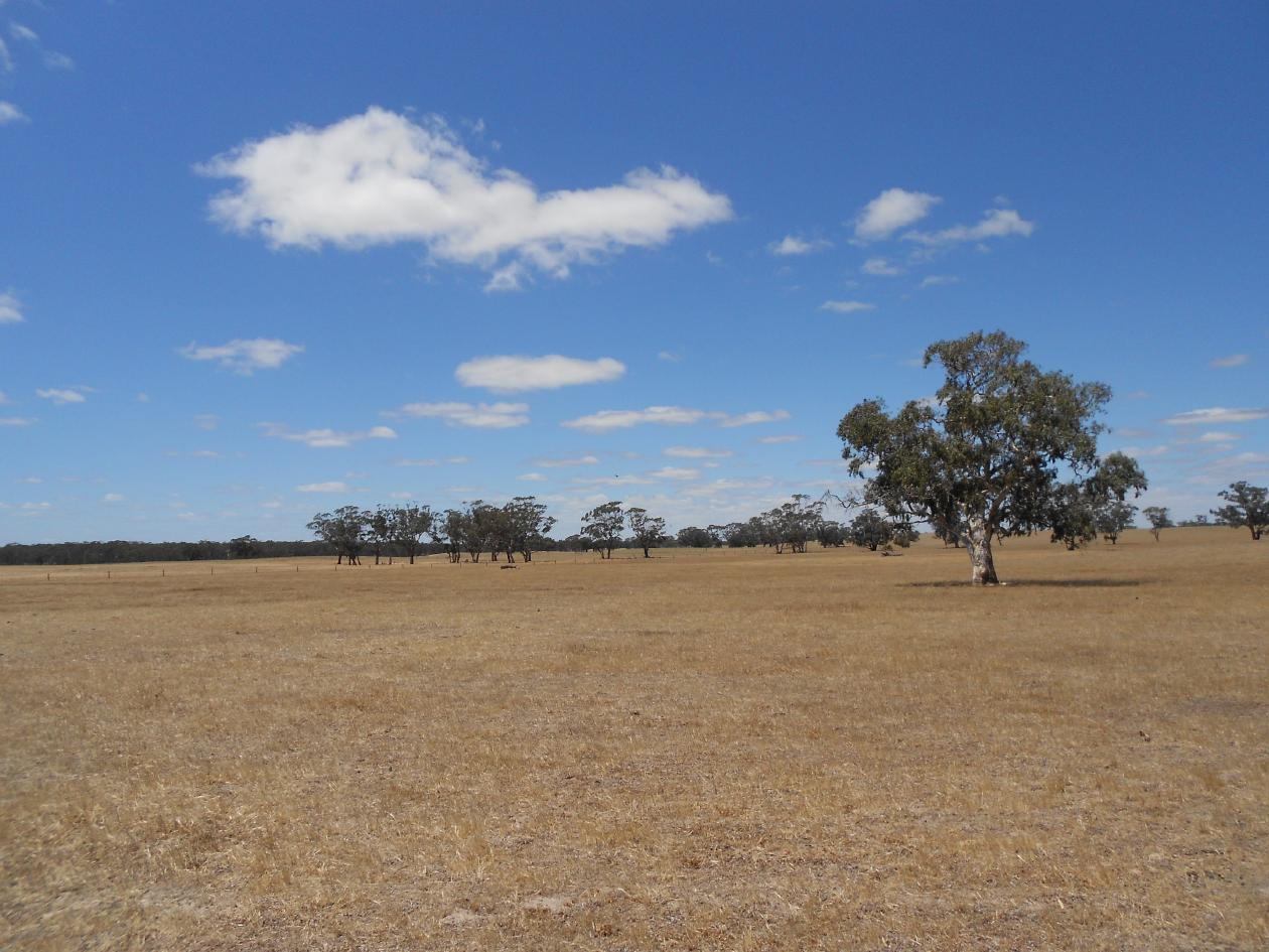 Various Lots Off Naracoorte Rd Bordertown Sa 5268 House For Sale 2011745805