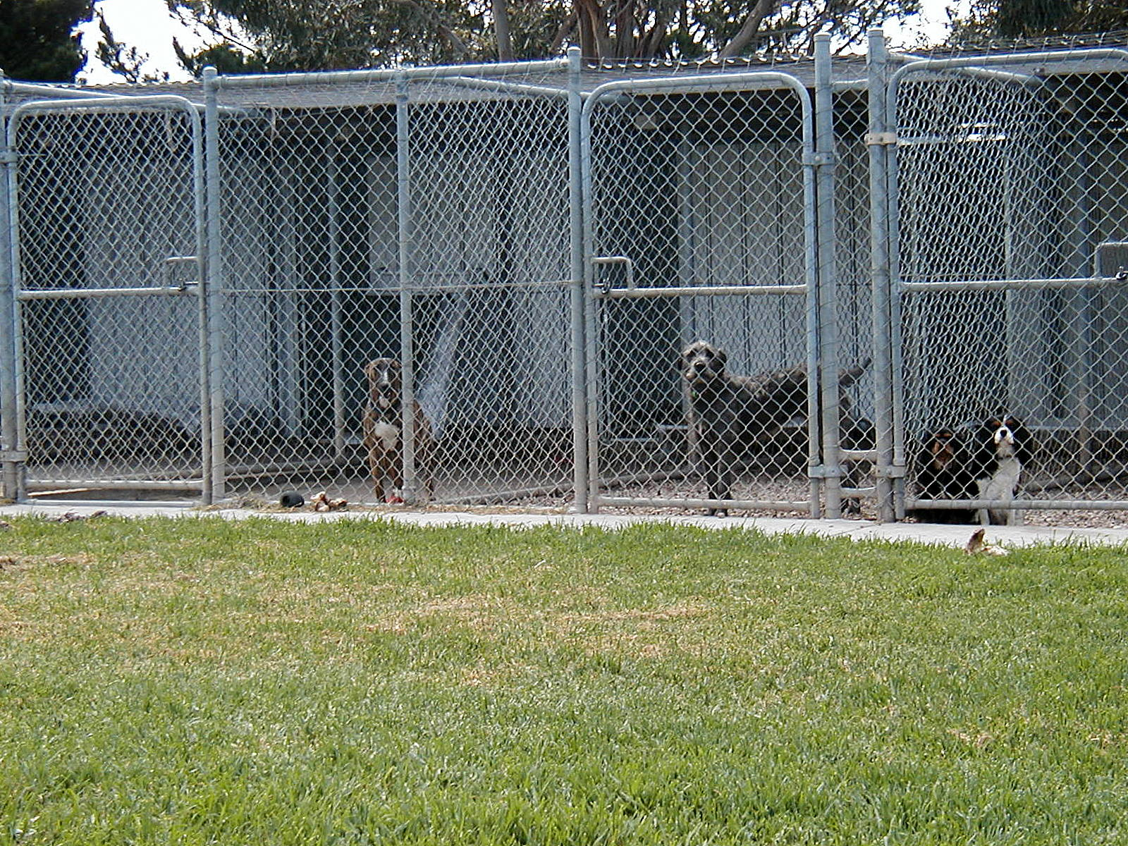 Dog Kennels For Sale Geelong