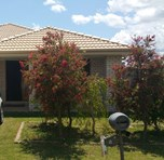 Picture of 8 Williams St, Lowood