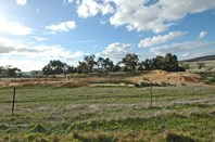 Picture of BARTRAM, Brookton