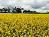 Picture of Cunderdin