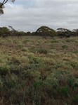 Picture of Lot 91 Foote Road, Eudunda