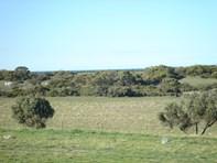Picture of Lot/2 South Coast Road, Sturt Bay via, Warooka