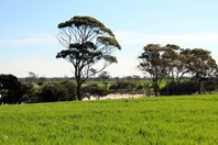 Picture of 418 Lake King - Newdegate Rd, Newdegate