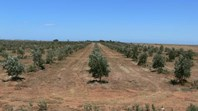 Picture of Lot 826 Port Wakefield Road, Lower Light