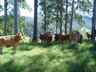 Picture of 496 Iron Pot Creek Road, Kyogle