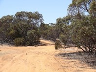 Picture of 31 Mulpata North Road, Lameroo