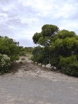 Picture of 10 Eucalyptus Court, Marion Bay