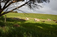 Picture of . Granite Rock Dairy Waltowa, Meningie