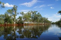 Picture of 'Emu Creek Station', Yannarie