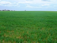 Picture of - Rural Land In Hundreds of Allen and Mindarie, Wanbi