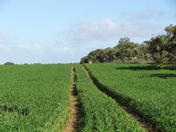 Picture of West Binnu