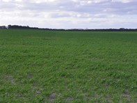 Picture of 'Coutts' Pingrup - Lake Grace Road, Pingrup