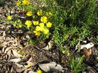Picture of 870 Baldock Road, Mount Helena