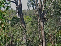 Picture of Lot 5, 260 Keenan Road, Chidlow