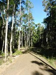 Picture of Lot 1-8 Douglas Track, Boonoolo, Kuranda