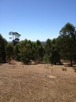 Picture of Lot 46 Bullara Ramble, Jarrahdale