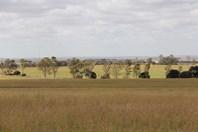Picture of 'Pinegrove' 638 Ballidu South East Road, Ballidu