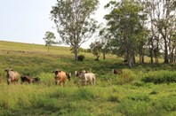 Picture of 170A Lagoon Grass Road, Lismore