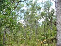 Picture of Section 3631 Fog Bay Road, Dundee Downs