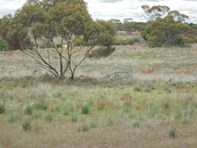 Picture of Lot 11 Greenshields Road, Younghusband