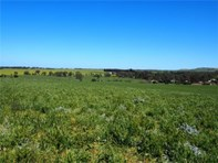 Picture of Lot 1 Short Street, Mintaro